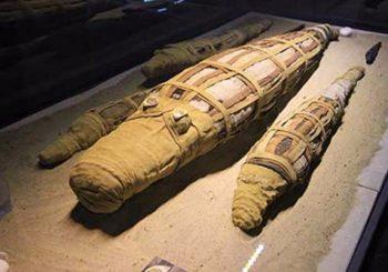 Obsah mumifikovaného krokodíla prekvapil vedcov