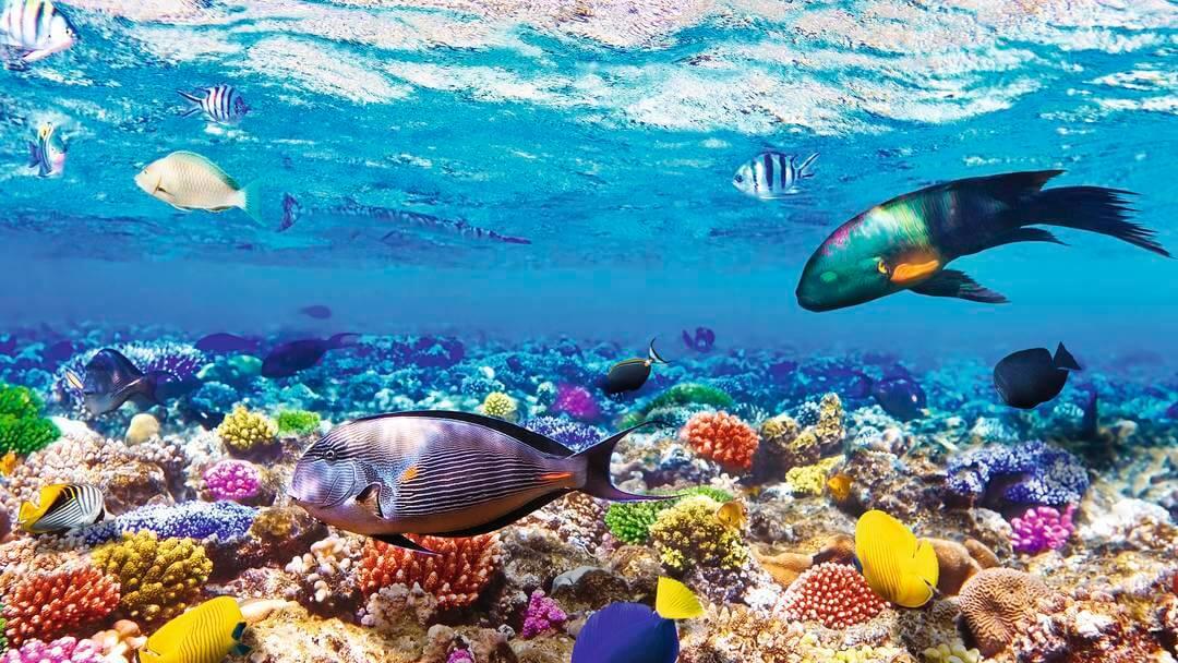 Sharm el Sheikh potápanie